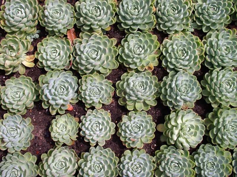 Download Plantas foto de archivo. Imagen de crecimiento, verde, resorte - 179728