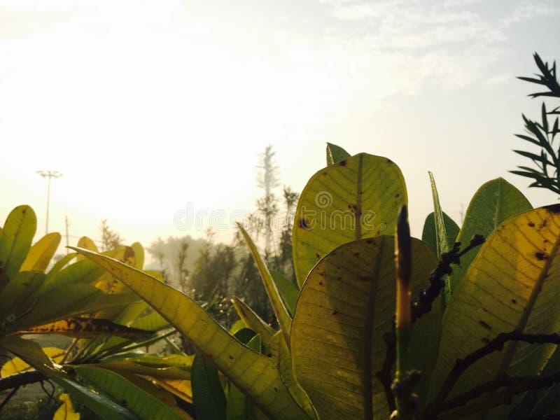 plantas fotos de archivo libres de regalías