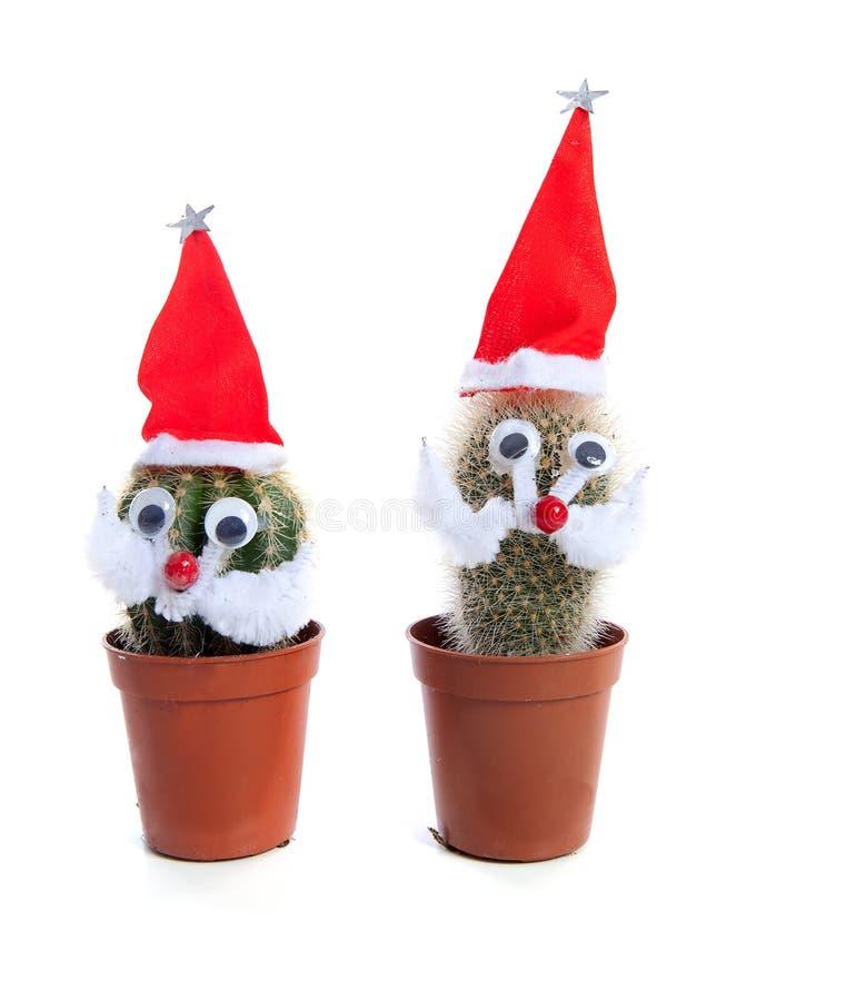 Plantas adornadas divertidas del cacto para la Navidad imagen de archivo