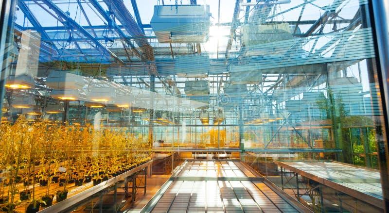 Plantas agrícolas en un invernadero, la selección científica foto de archivo libre de regalías