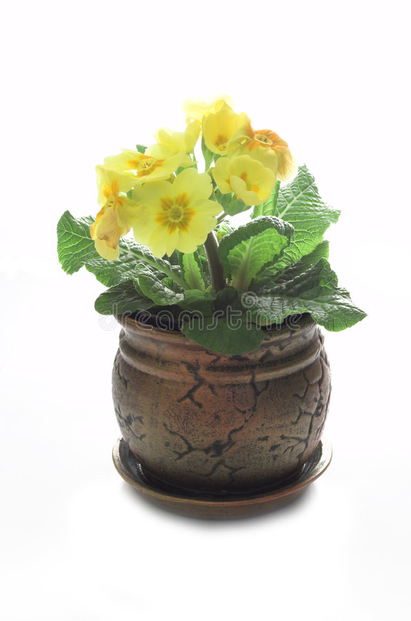 Plantas aisladas foto de archivo