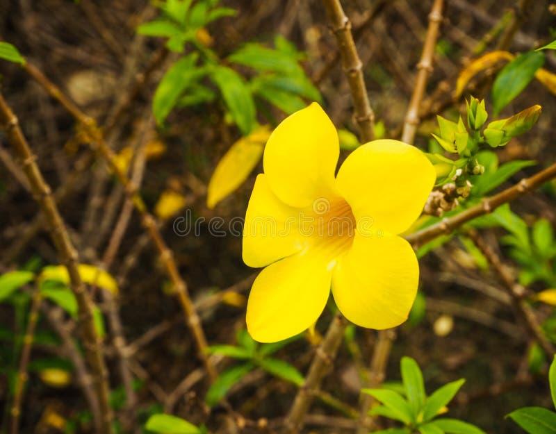 Plantas amarillas de la flor foto de archivo
