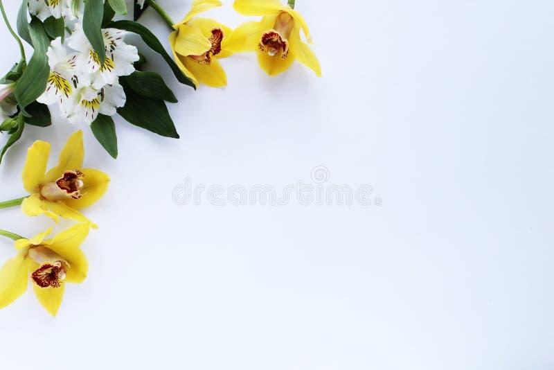 Plantas amarillas de la primavera del fondo del marco de la flor imagen de archivo libre de regalías