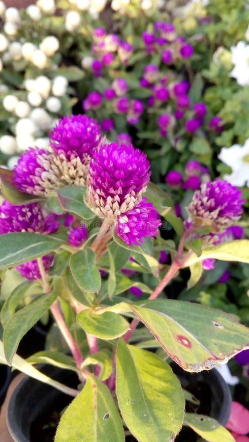 Plantas ao ar livre foto de stock royalty free