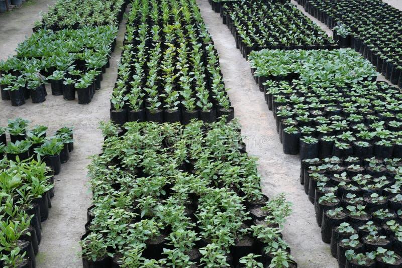 Plantas bastante ornamentales que son cultivadas en for Plantas para invernadero