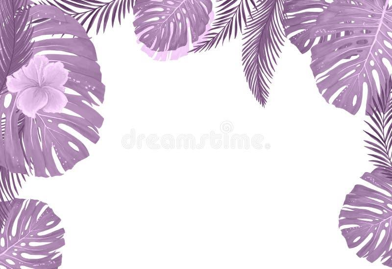 Plantas botânicas tropicais, fundo com as folhas do coco e folha da selva do cartão do projeto da banana no fundo branco ilustração do vetor