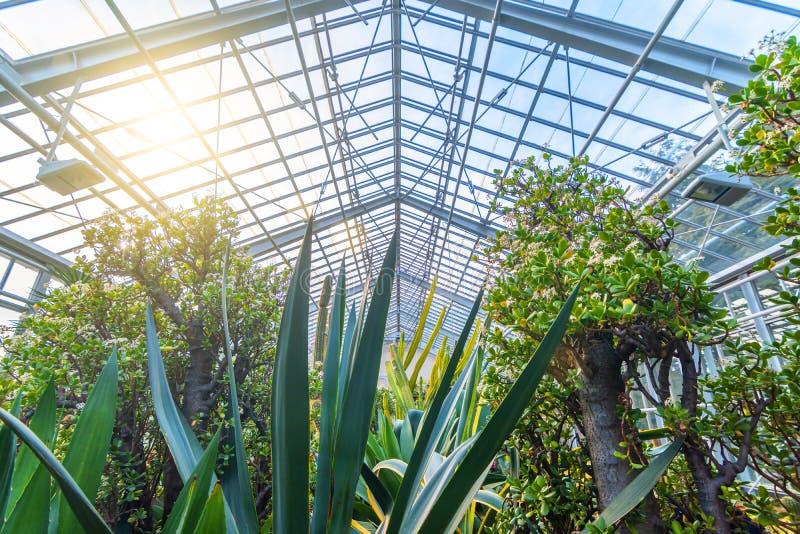 Plantas, cactus y succulents exóticos hermosos en el invernadero fotos de archivo