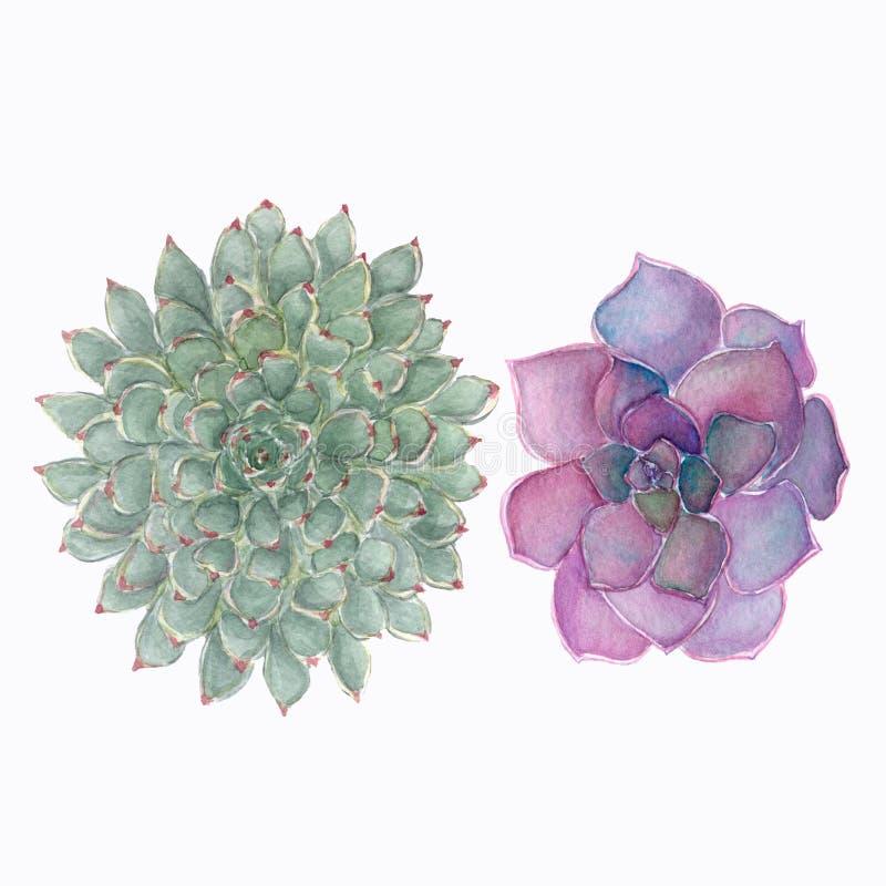 Plantas carnudas ajustadas florais coloridas da aquarela ilustração stock
