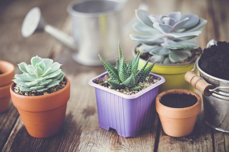Plantas carnudas, cubeta do solo e lata molhando fotos de stock royalty free