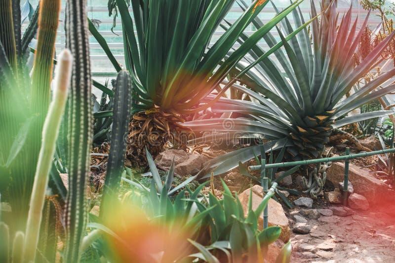 plantas carnudas e cactos no jardim tropical foto de stock royalty free