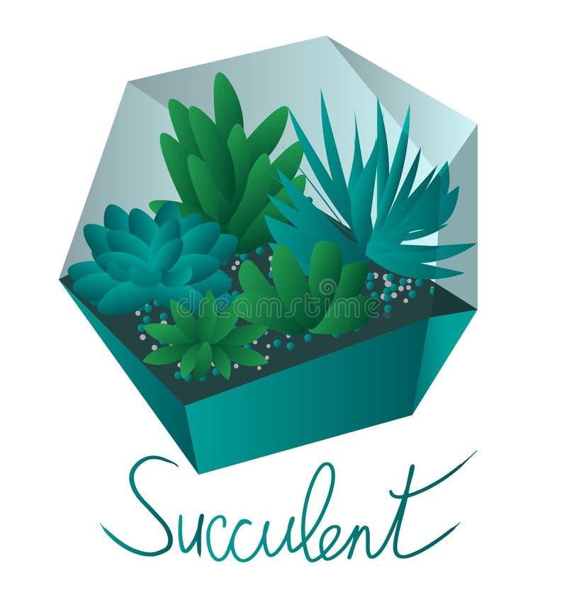 Plantas carnudas em plantas carnudas de um Terrarium em uns potenciômetros, isolados no fundo branco ilustração stock