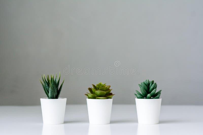 3 plantas carnudas em um potenciômetro fotografia de stock