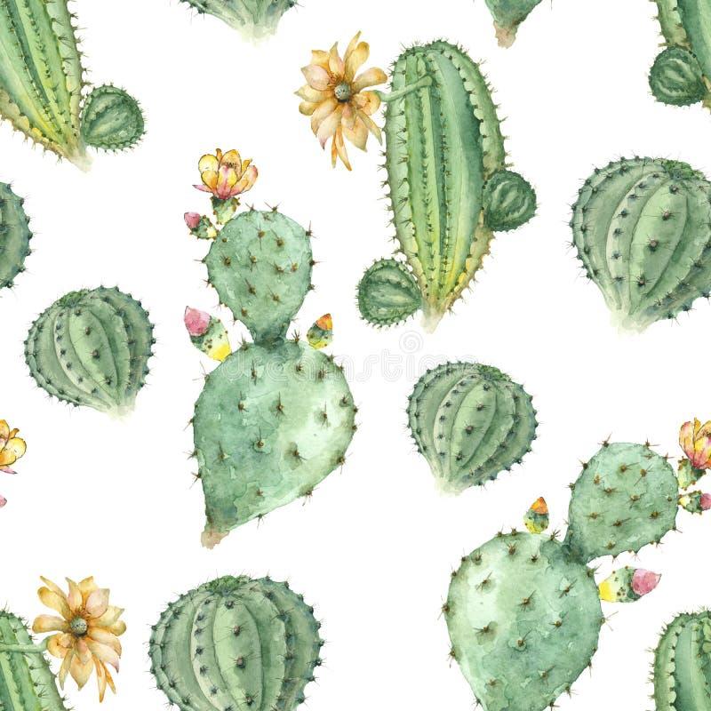 Plantas carnudas na aquarela ilustração royalty free