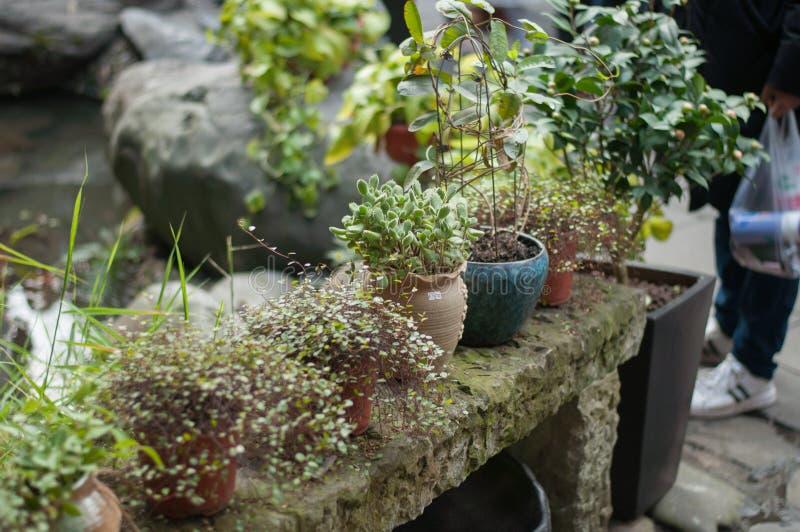 Plantas carnudas na bacia alinhada no banco imagens de stock
