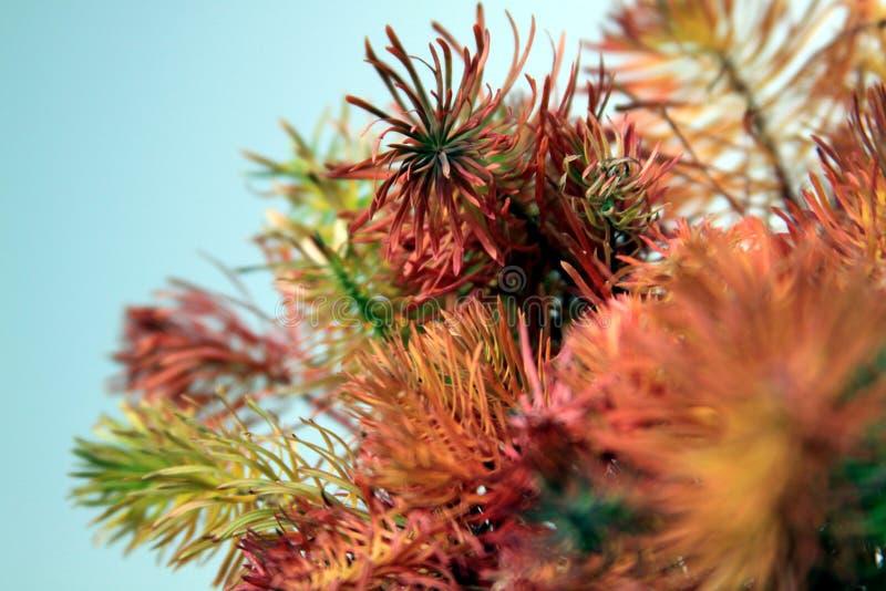 Download Plantas Coloreadas En El Fondo Blanco 04 Imagen de archivo - Imagen de color, composiciones: 41900623