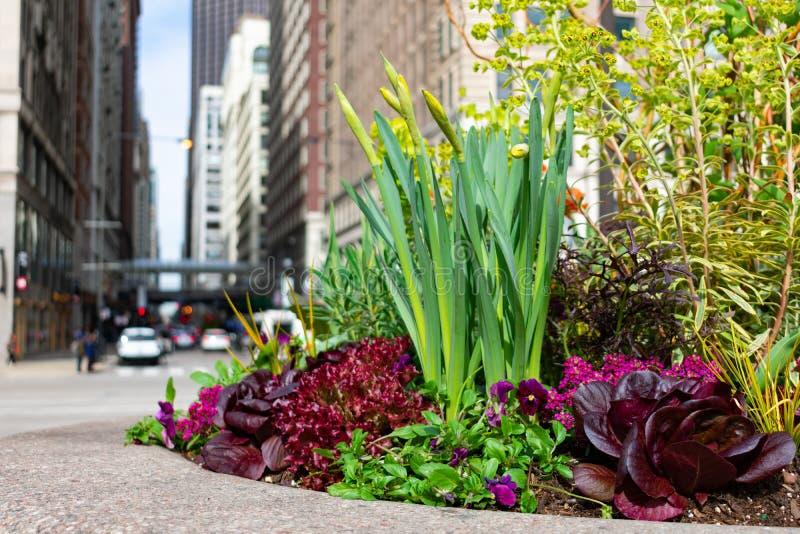 Plantas Coloridas e Flores na Sidewalk na Avenida Michigan, em Chicago foto de stock