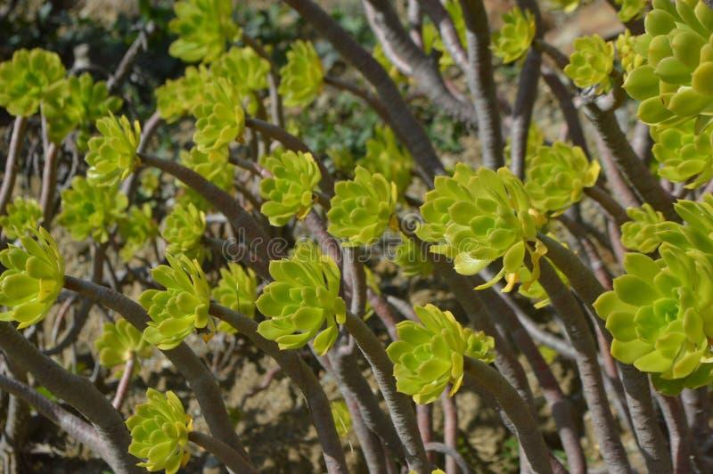 Plantas coloridas en un jardín foto de archivo