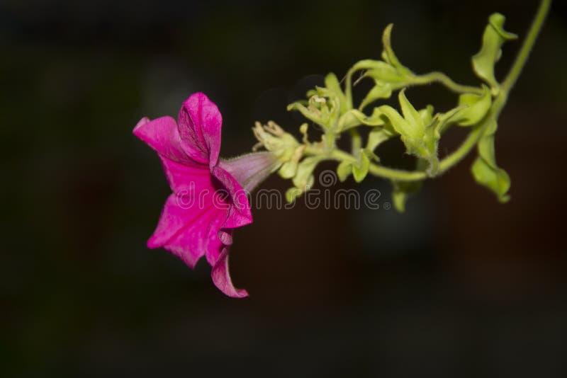 Plantas coloridas que revelan la belleza de la naturaleza foto de archivo libre de regalías