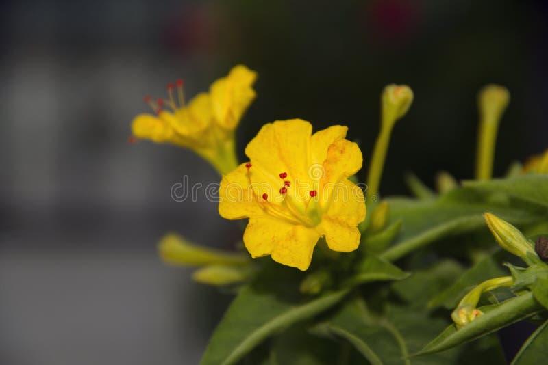 Plantas coloridas que revelan la belleza de la naturaleza imágenes de archivo libres de regalías
