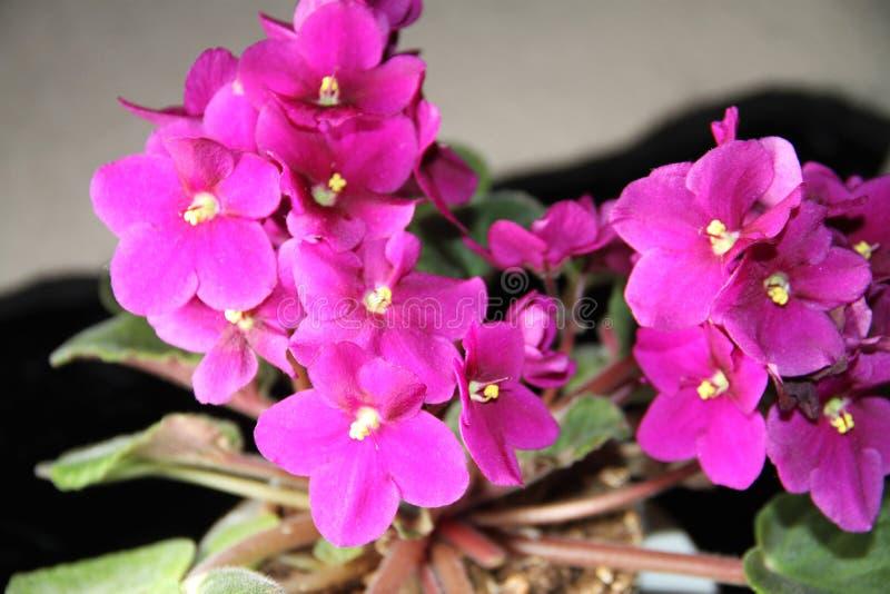 Plantas coloridas que revelan la belleza de la naturaleza fotografía de archivo
