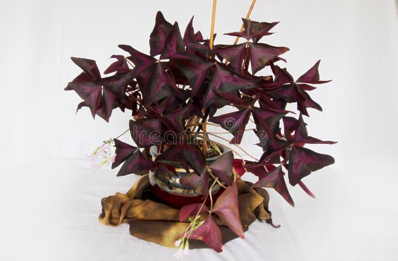 Plantas coloridas que revelan la belleza de la naturaleza imagen de archivo libre de regalías