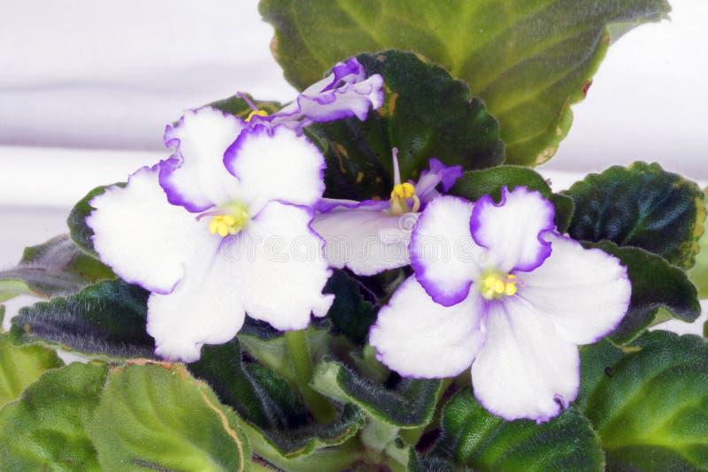 Plantas coloridas que revelan la belleza de la naturaleza foto de archivo