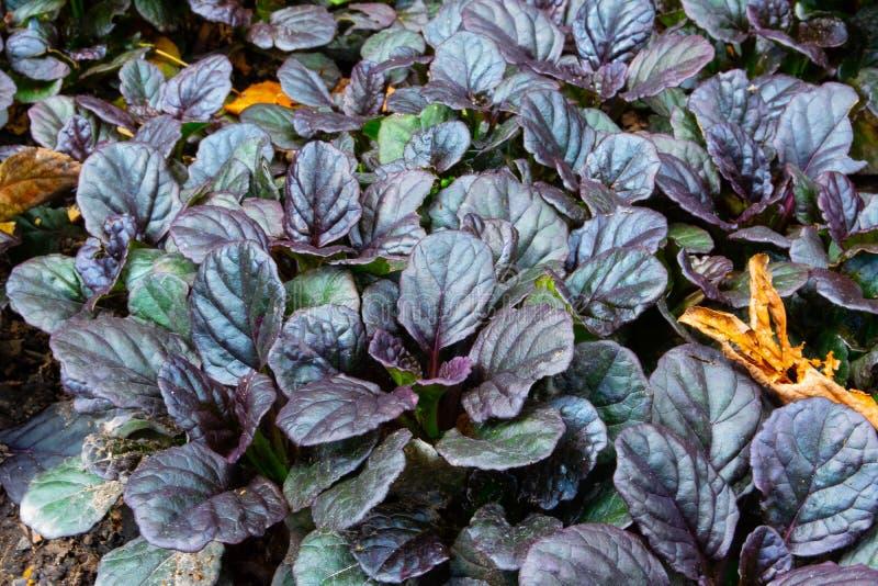 Plantas con las hojas en el prado foto de archivo libre de regalías