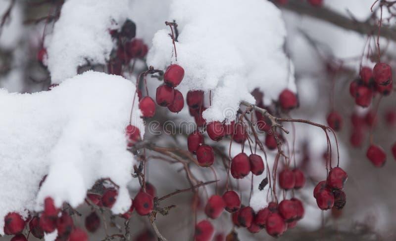 Plantas congeladas durante un día de invierno muy frío en las montañas de Rumania fotos de archivo libres de regalías