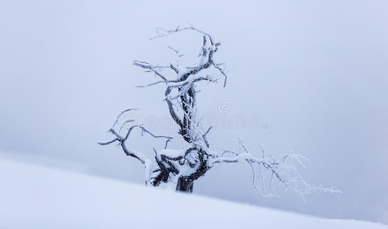 Plantas congeladas durante un día de invierno muy frío en las montañas de Rumania fotografía de archivo