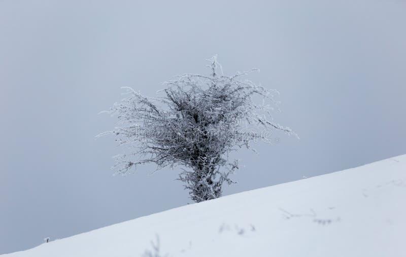 Plantas congeladas durante un día de invierno muy frío en las montañas de Rumania foto de archivo libre de regalías