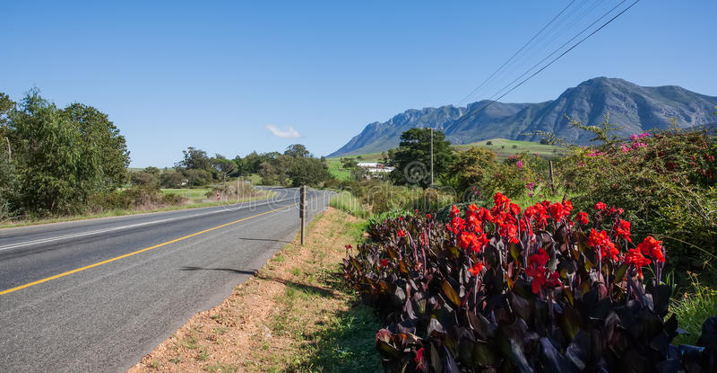 Plantas contra el camino. foto de archivo libre de regalías