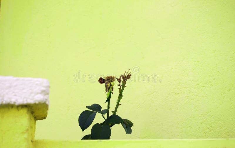 Plantas contra o fundo brilhante do verde-lima fotos de stock royalty free