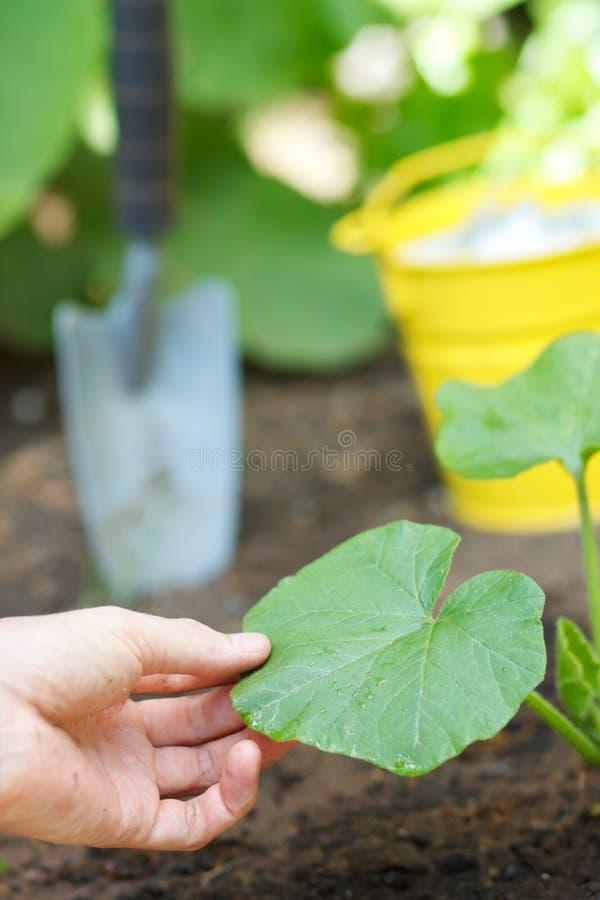 Plantas crescentes foto de stock