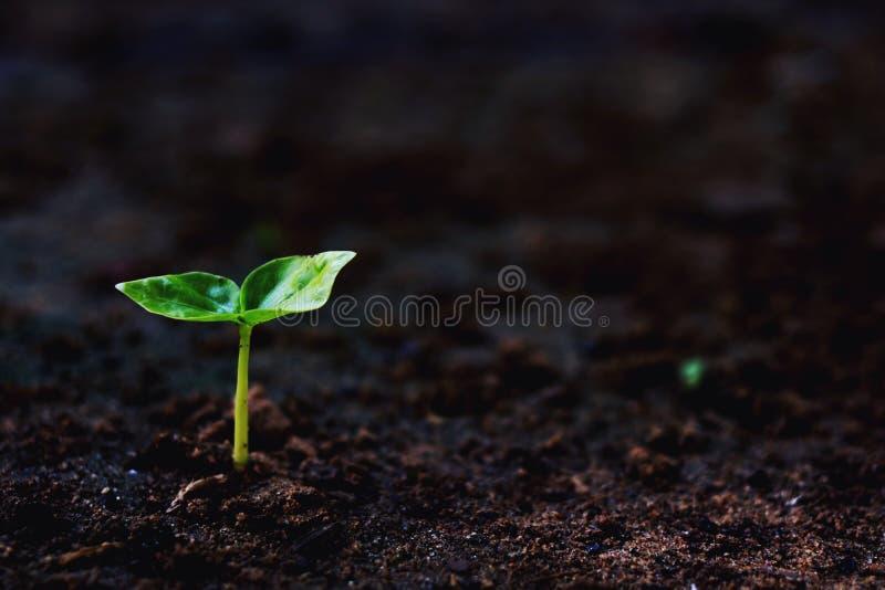 Plantas crescentes, foto de stock