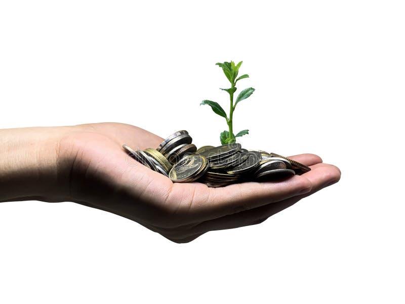 Plantas cultivadas con monedas de dinero por manos de mujeres - concepto de metáfora financiera y de negocios imagen de archivo libre de regalías