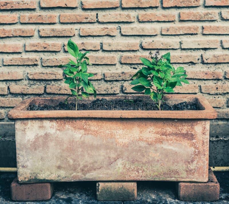 Plantas da árvore no potenciômetro longo imagem de stock royalty free