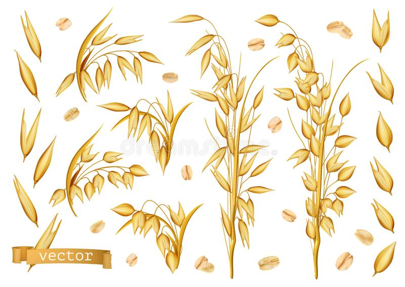 Plantas da aveia, aveia rolada grupo realístico do ícone do vetor 3d ilustração royalty free