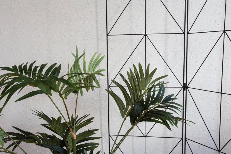 Plantas da casa no projeto moderno branco, fundo do close-up fotografia de stock