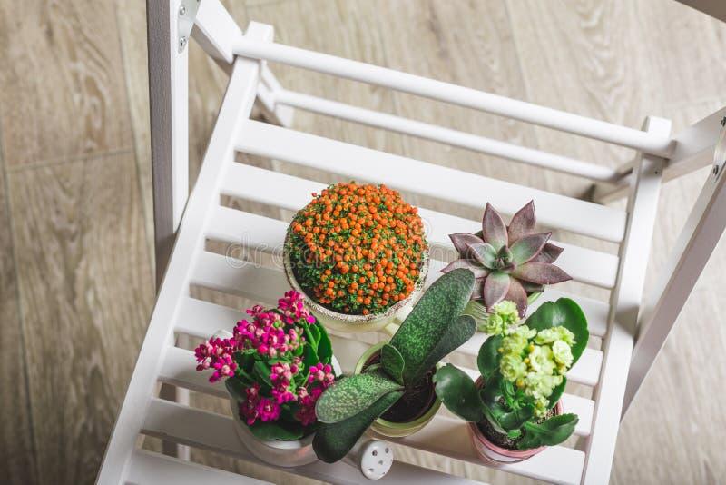 Plantas da casa, plantas carnudas foto de stock