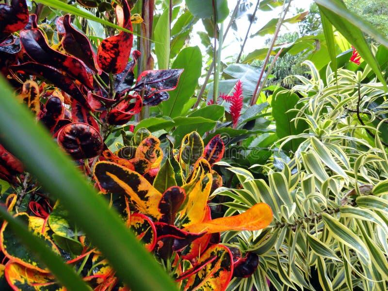 Plantas da floresta úmida, Costa Rica imagens de stock