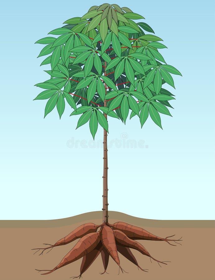 Plantas da mandioca ilustração royalty free