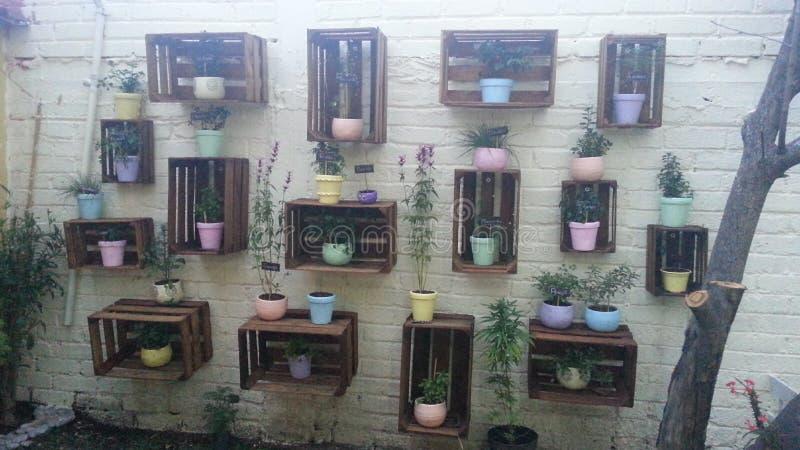 Plantas da medicina foto de stock royalty free