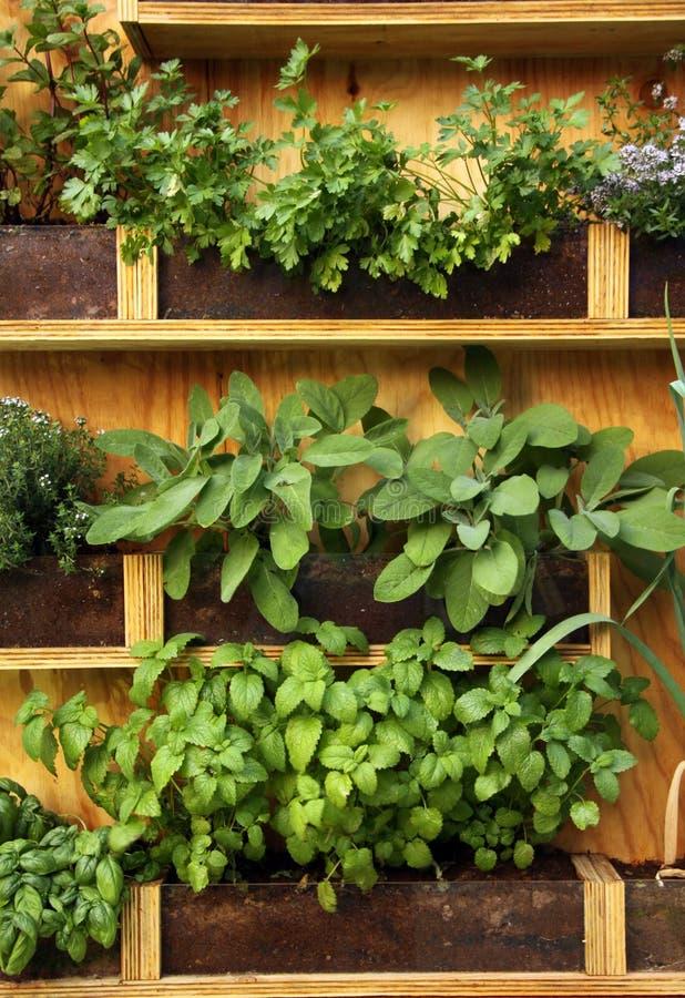 Plantas das ervas imagens de stock royalty free