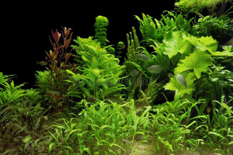 Plantas de agua fotografía de archivo libre de regalías