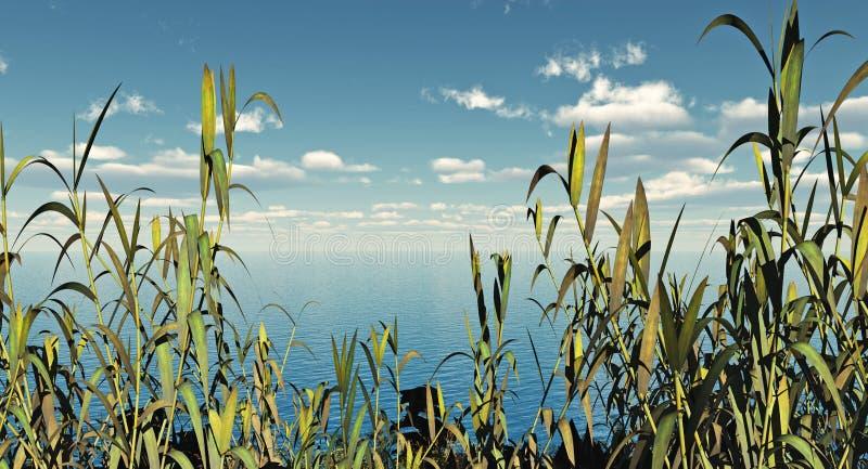 Plantas de agua libre illustration