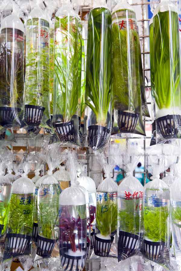 Plantas de agua dulce para la venta fotos de archivo libres de regalías