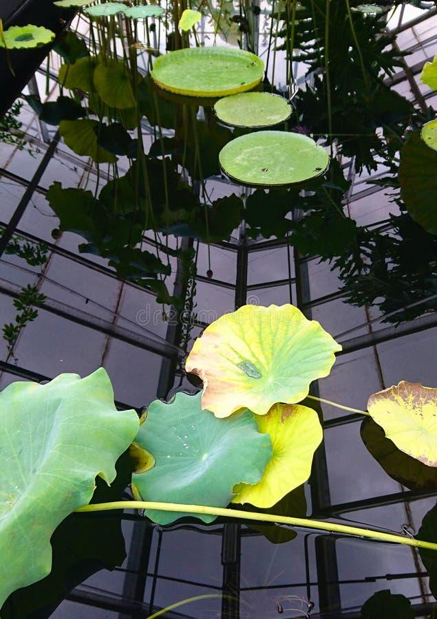 Plantas de agua en el jardín botánico foto de archivo libre de regalías