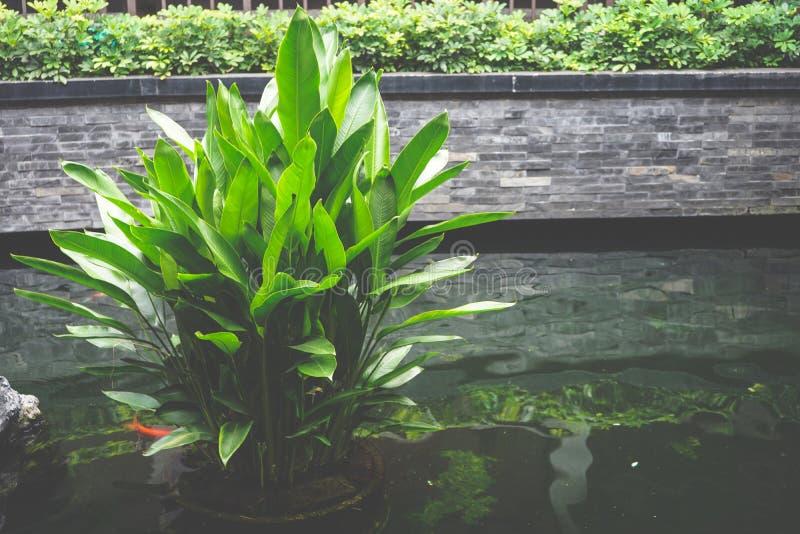 Plantas de agua verdes frescas en la charca imagen de archivo