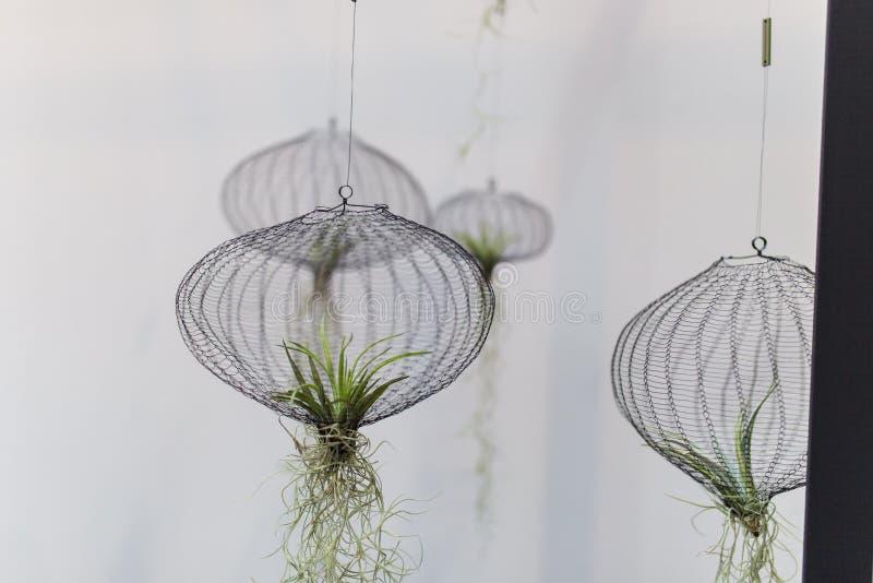 Plantas de aire en una red fotos de archivo