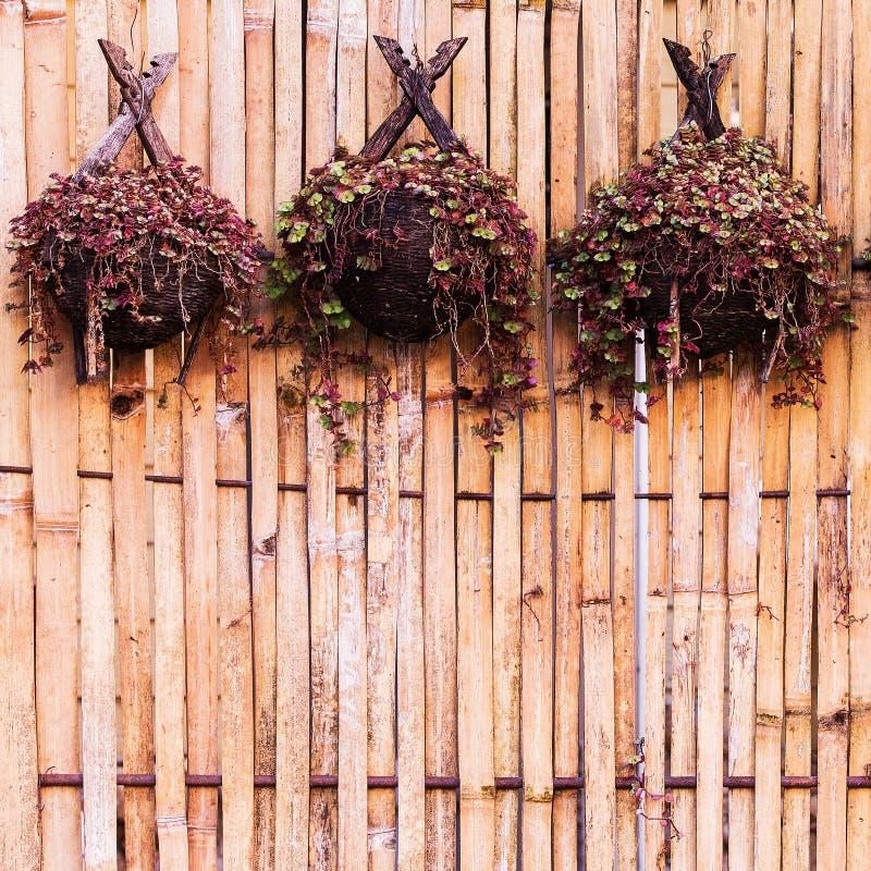 Plantas De Bambú Para Colgar Imagen de archivo - Imagen de flor ...